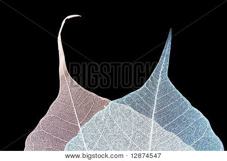 transparent leafs