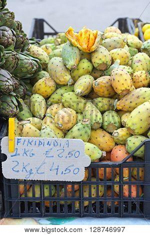 Fruits of Opuntia Ficus Indica Prickly Pear Cactus