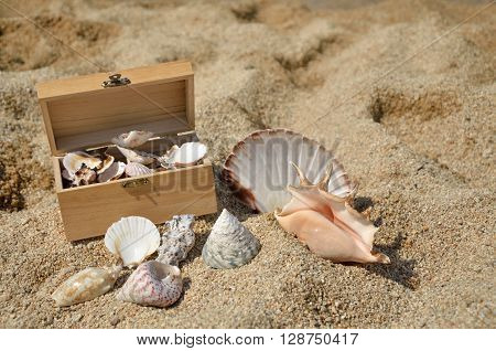 Red starfish and lot of seashells in wooden chest and around it on sandy beach