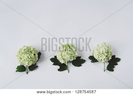 Three Green Flower With Leaves Lying On A White Background