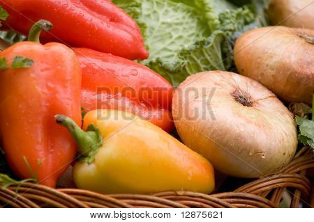 Harvest of the vegetables