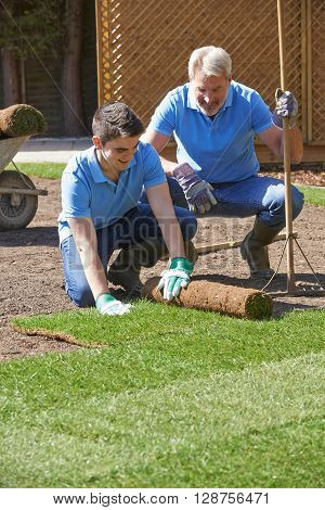 Landscape Gardeners Laying Turf For New Lawn ** Note: Soft Focus at 100%, best at smaller sizes