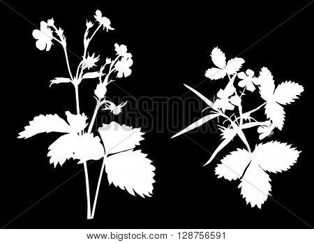 illustration with strawberry plant silhouette isolated on black background