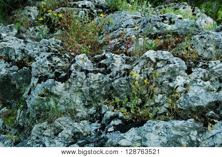 on a rocky surface and small plants green gray yellow algae view