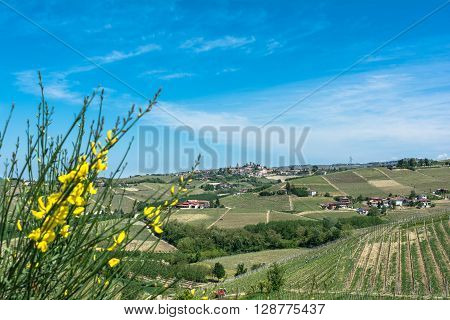 Langhe, Piedmont, Italy, Europe - May 3, 2016 : View of vineyards and fields in Barbaresco zone with Neive village in background