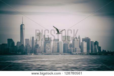 Seagull Flying Against Manhattan