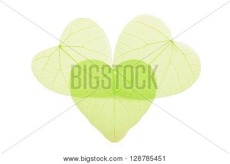 Three Green Heart Shaped Skeleton Leaves On White