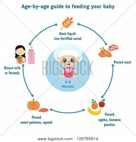 Baby child infographic presentation template with baby food. Age - by- age guide to feeding your baby: 4-6 Months.