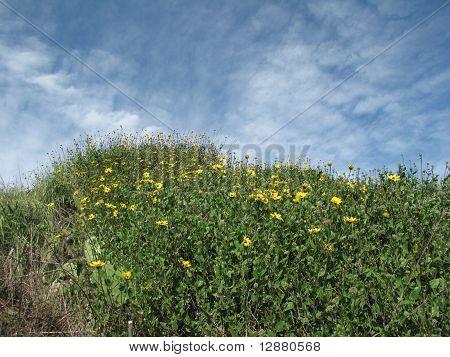 Bartlett Park Flowers