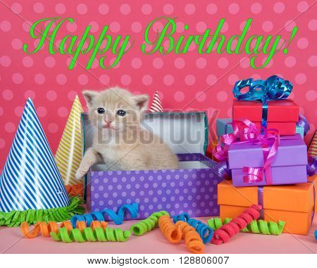 Orange Buff Kitten In Birthday Box With Presents And Party Hats