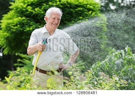 Gardener Watering The Plants