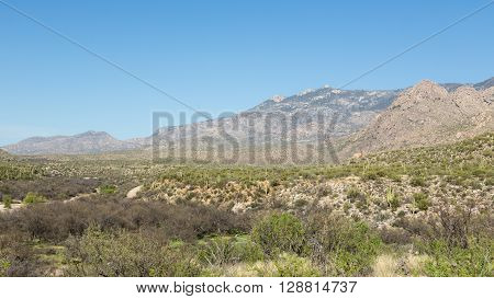 Saguaro cacti dot the hills of Catalina State Park