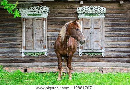 Peasant bay horse stands near a old rustic log farmhouse with shutters