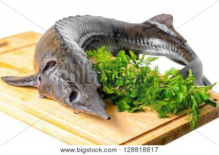 fresh raw sturgeon fish with greens on wooden plank is isolated on white background closeup