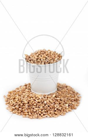 White bucket full of pearl barley stands on a heap pearl barley on a white background