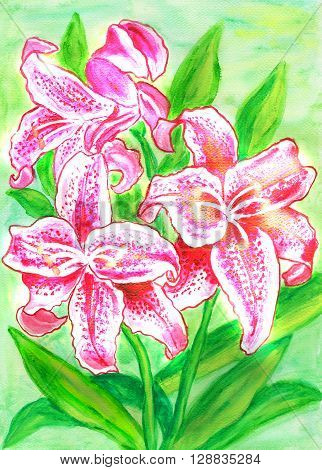 Pink lilies hand painted picture in watercolours.