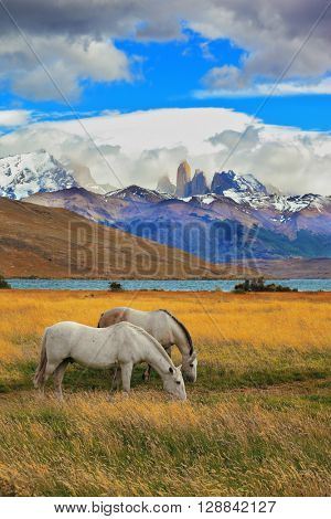 The landscape in the national park Torres del Paine, Chile. Lake Laguna Azul in the mountains. On the shore of Lake grazing horses