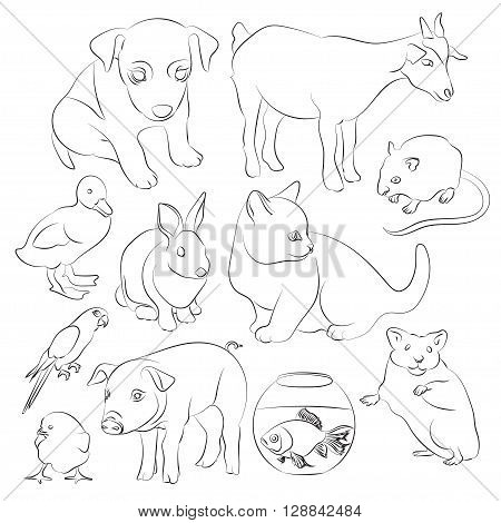 Animals pets vector icons set. Illustrations of various domestic animals - dog, cat, parrot, fish, pig, bunny and other
