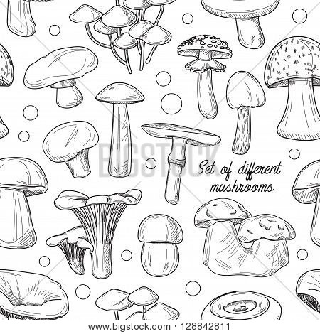 Pattern of different mushrooms. Vector illustration. Cep and boletus luteus. Saffron milk cap and death cap, morel and gyromitra, armillaria. Chanterelle and champignon.