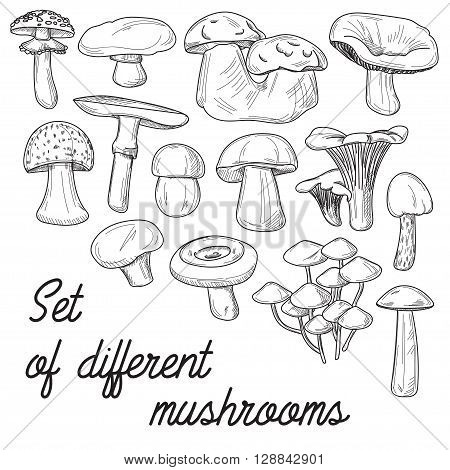 Mushrooms set. Vector illustration of different types of mushrooms. Cep and boletus luteus. Saffron milk cap and death cap, morel and gyromitra, armillaria. Chanterelle and champignon.