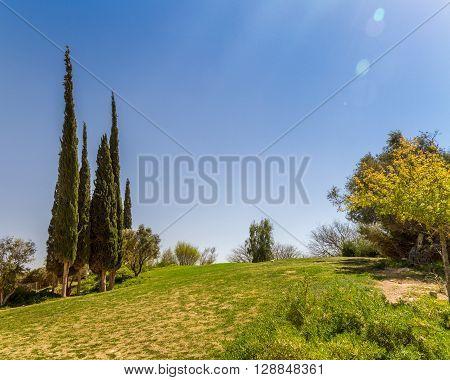 Cypresses on a hill in Kibbutz Sde Boker in the Negev desert Israel