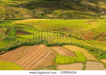 Green Rice Fields On Hills In Central Madagascar