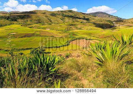 Landscape With Rice Fields In Central Madagascar