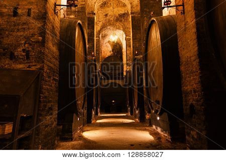 cellar with barrels for storage of wine Italy