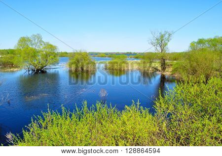 Water spring landscape - backwater of Volkhov river and riparian trees flooded with river water in nice spring weather. Spring colorful rural landscape.