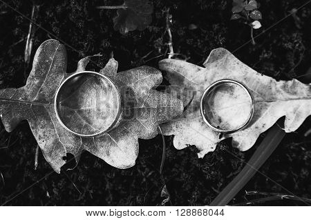 Two rings on oak leaves background, blac and white photography.