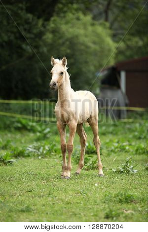 Amazing Foal Alone On Pasturage