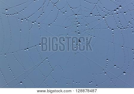 close up of cobweb with rain drops