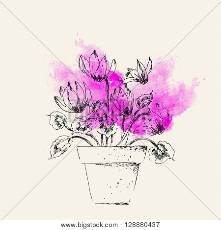 Hand drawn line art pot cyclamen flower on bright pink watercolor splash. Spring cyclamen ink drawing for easter card gardening backgrounds floral design.