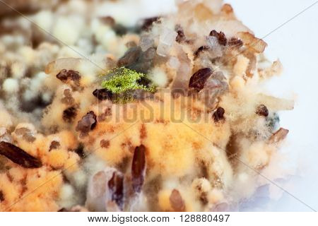 Mold growing rapidly on moldy rice in yellow and orange spores