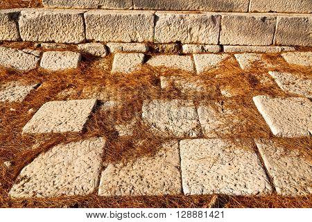 Pine Needles    Ruins  Arykanda Turkey