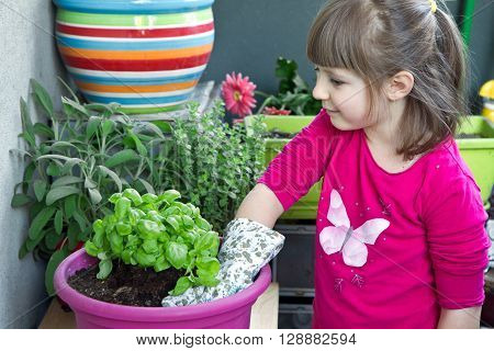 a Young girl gardening basil plant smiling