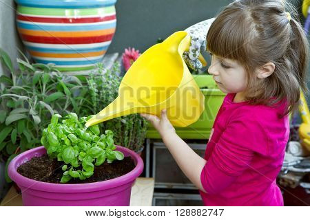 a Young girl watering basil plant smiling