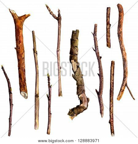 watercolor wood twigs, isolated hand drawn nature objects, tree branches, sticks, hand drawn illustration