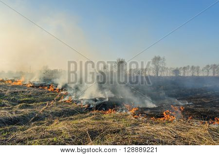 A natural disaster. Burning dry grass in spring