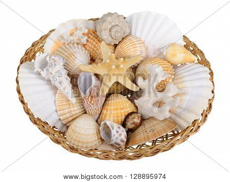 Sea shells in basket isolated on white