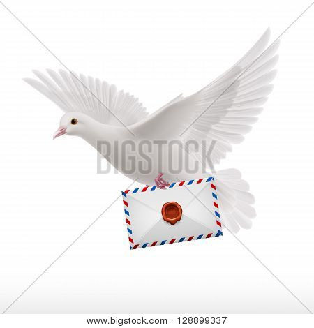 White pigeon fly with letter in beak