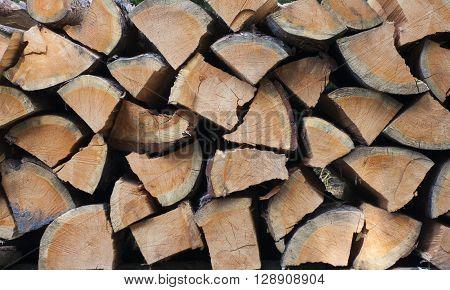 Cut pieces of pine tree. Texture closeup