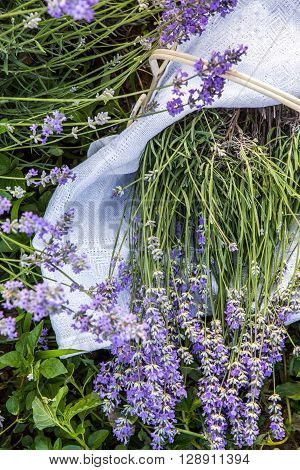 Closeup of fresh lavender flowers vertical background