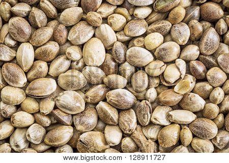 background of organic dried hemp seeds, life size macro