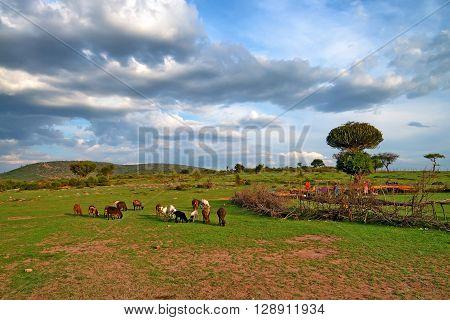 Picturesque savanna landscape with maasai village in Africa