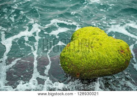Mossy covered stone by the sea with white bubbles