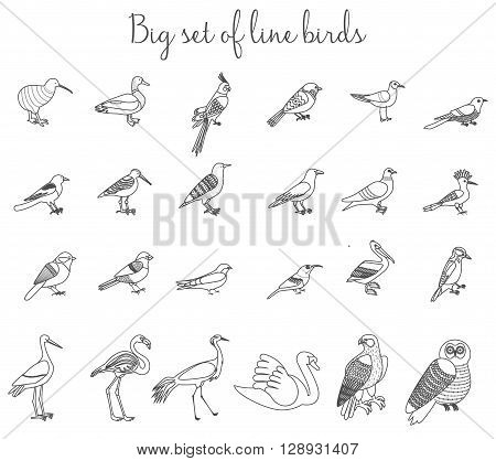 Birds outline thin line illustration icons. Colorful cartoon birds icons set