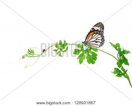 the green creeping plant with butterfly and ladybug on white background