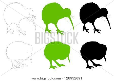 A collection of Kiwi bird (adult & baby) illustrations. Ideal for web site tourism brochure or educational purposes.