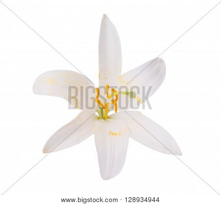 white lily on a white backgroundflora, front, lilly, bouquet,